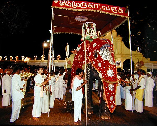 Mounted upon a tusker, Swāmi emerges from His temple compound to visit Valli Amma each evening of the festival. Photo © 1991 Xavier Zimbardo