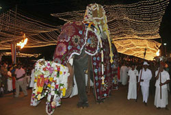 The main perahera sees a grandly caparisoned elephant carrying the Kataragama Deviyo, flanked by dancers and drummers