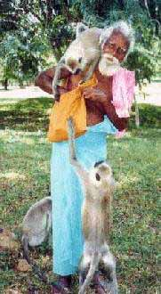 Narayanapillai Swami with monkeys